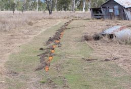 carrot trail