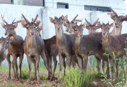 deer - main image