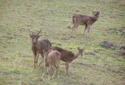 deer_010