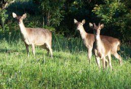 deer_012
