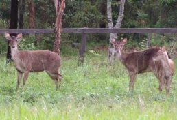 deer_013