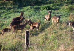 deer_05