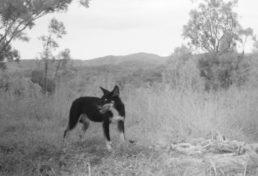 wild dog_07